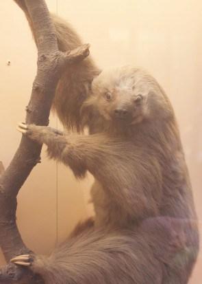 Fur-sloth