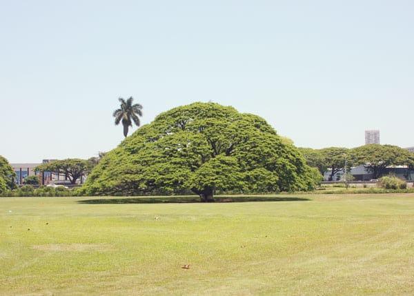 Picnic-Hitachitree